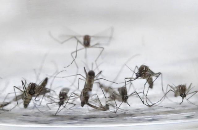 Virus Zika: diffusione, sintomi e contagio in una infografica